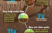 Infografía de lombriz