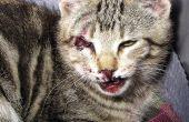 Odisea de Homero, la historia de un gato y cómo obtener demasiados gatitos sin tratar, realmente rápidos.