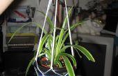 Cómo hacer un soporte de cuerda de planta en maceta colgante: un poco