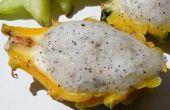 Sorbete de frutas (Palinka) Dragon