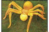 Araña de jardín!