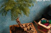Bonsai en la caja - La caja del Bonsai