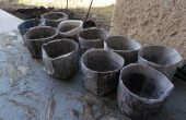 Cómo para: Arrancadores de semilla diario biodegradables