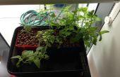 Mini jardín de hierbas de hidroponía V2.0