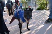 Doggy traje del pirata con pata de Peg