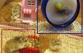 Hamster a Mongolia,
