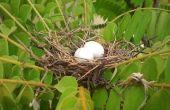 Pájaro del nido de la cáscara del