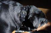 Cómo hacer un collar de perro barato.