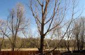 Corte abajo de un árbol en trozos