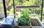 Agricultura urbana: Arranque interior plantas de semilla