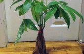 Trasplante una planta de la casa a maceta mas grande (sin comprar nada!)