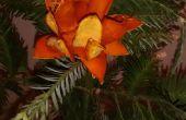 Hoja perenne flor de naranja