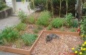 Jardín de hierbas de pajote de hoja simple