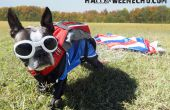 Volando en de arriba, es Echo el paracaidista patriótico!