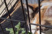 Formas de dar medicamentos de gato en casa, con edad avanzada inteligente gato calico