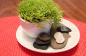 Pequeño jardín de té verde