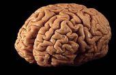 Cómo jugar con tu mente