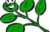 3 maneras fáciles de contentar a sus plantas