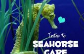 Introducción a la atención de Caballito de mar