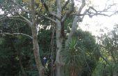Cómo hacer una cuerda en un árbol (sin subirlo)