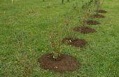 Plantar arbustos en otoño