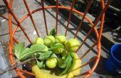 Dos mucho mejor fruta recolectores