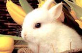 Básica en vivo trampa para conejos, ardillas y otros animales