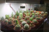 Tanque de exhibición de Cactus DIY!