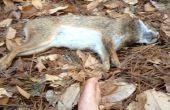 Cómo cocinar un conejo en el bosque