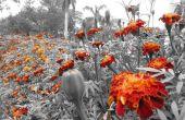 Las flores siempre dan colores a este mundo de blanco y negro