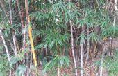 Amplificador de música de teléfono móvil de bambú fácil (10 minutos)