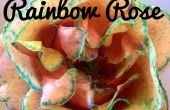 Arco iris rosa