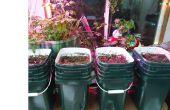 Aquaponic híbrido / tierra jardín invernal interior