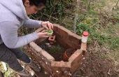 Helicicultura - caracol granja vivero
