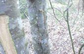 Ocultar punto en un árbol