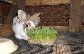 Crece tu propio conejo de la alimentación
