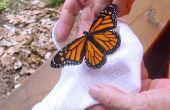 Granja de mariposas monarca