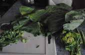Verdes de Zanzíbar coco