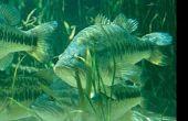Tácticas de pesca Bass