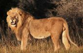 Tours de Safari Africano: Para aquellos que ama la aventura