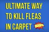 Cómo matar las pulgas en la alfombra natural