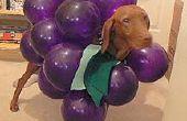 Hacer su perro en un racimo de uvas para Halloween