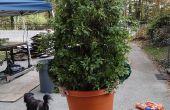 Traje de arbusto (Bush, planta)
