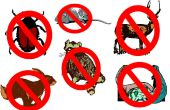 Cómo deshacerse del indeseado animales - actualizados