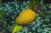Comida casera de Gel de pescado