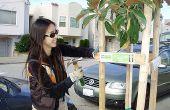Cómo hacer un árbol en su bloque en San Francisco