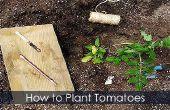 Plantas de tomate - plantar ATA para arriba y guía de crecimiento