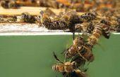 Cosecha y extracción de la miel