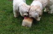 Simple placer de verano para perros, combatir el calor!
