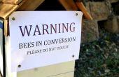Colmena de la abeja nativa